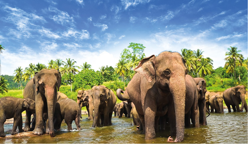 sri-lanka-elephants-1600x900